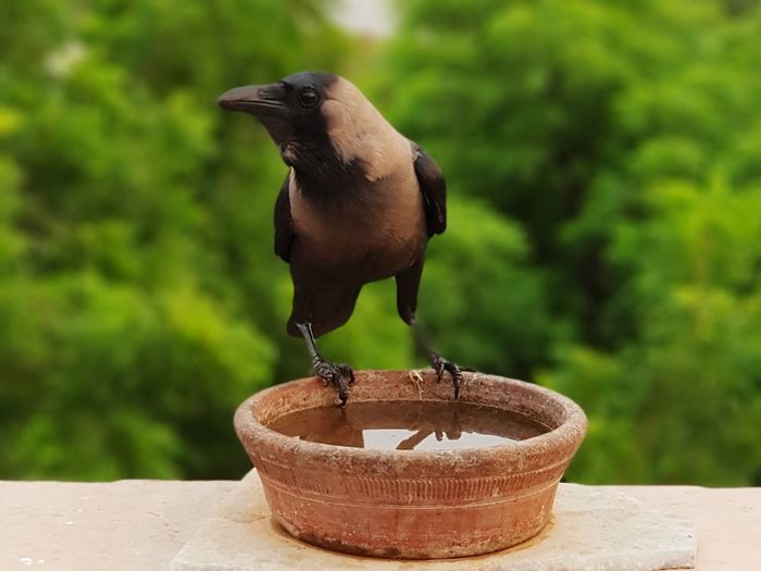 crow EyeEm Selects Tree Close-up Plant Flower Head Blooming Terracotta Petal Stem Earthenware Bagan Myanmar Culture Molding A Shape Pot Pagoda Ayuthaya Province Ceramics Pottery Bud Sculptor Growing In Bloom Fragility Pollen Flower Pot Plant Life Clay