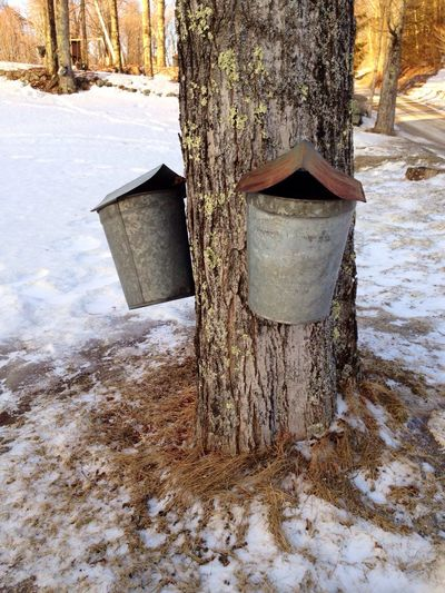 Late winter means tapping maple trees and making maple syrup here in New England. New England  Winter Mother Nature Is My Jailer... And My Mistress My View