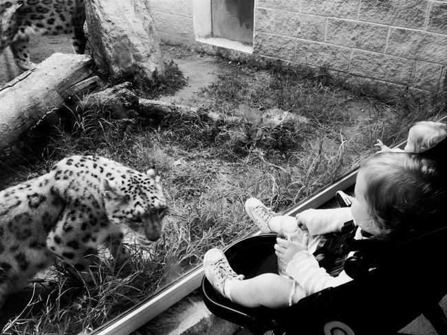 AT THE ZOO Black And White Female Funny Leopard Leopardo Lovemyjob Sister Twins Watching Work Zoo Zoo Animals  Zooanimals Zoophotography