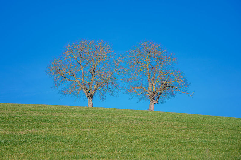 Tree on field against clear blue sky