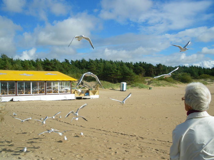 Beach Bird Flock Of Birds Flock Of Seagulls Flying Leisure Activity Lonely Beach Lonely Person Mid-air Old Person One Person Outdoors Sand Seagull Seagulls Sky And Clouds Spread Wings Unrecognizable Person Paint The Town Yellow Lost In The Landscape