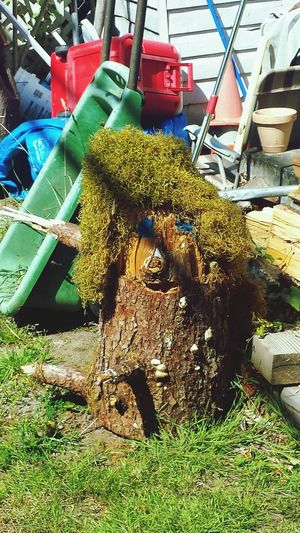 Taking Photos Tree_collection  Tree Stumps Eyeem Photography Eyeem Photo Color Eyeem Best Shots Eyeem Gallery Photos Around You Check This Out ArtphotographyArtphotography Art, Drawing, Creativity Showcase July 2016 Pattern, Texture, Shape And Form Patterns In Nature Nature_collection Arlington, Wa Outdoor Photography July2016 Art Therapy Interesting Perspectives Fine Art Photography