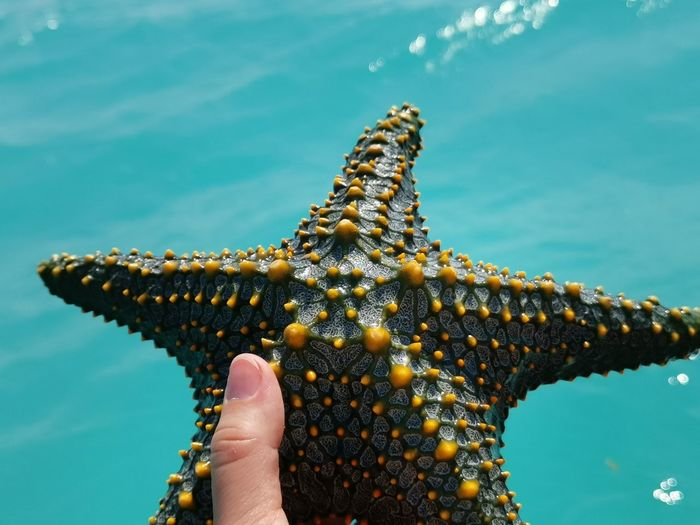 Low section of person holding starfish