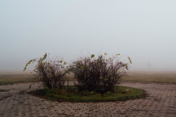 Plants Growing On Dirt Road In Foggy Weather Against Clear Sky