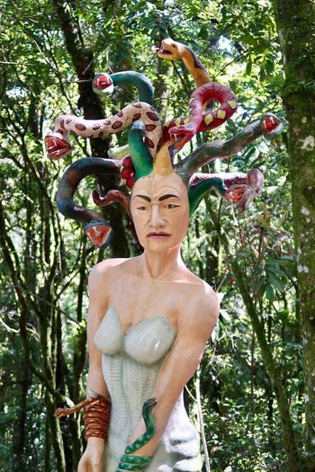 Medusa Medusa Head Sculpture Plant Tree Looking At Camera Women One Person Nature Portrait
