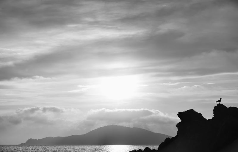seagull Sky Cloud - Sky Beauty In Nature Scenics - Nature Tranquil Scene Silhouette Water Nature Non-urban Scene Tranquility Rock Sunlight Outdoors Idyllic No People Mountain Rock - Object La Spezia Gulf Tellaro Italy Blackandwhite Bw_collection BW_photography Seagull