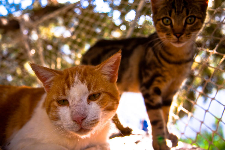 Two different personalities. GREECE ♥♥ Summertime Animal Themes Cat Day Domestic Animals Domestic Cat Feline Ginger Cat Greece Lazy Looking At Camera Mammal No People Outdoors Pets Portrait Sleepy Summer