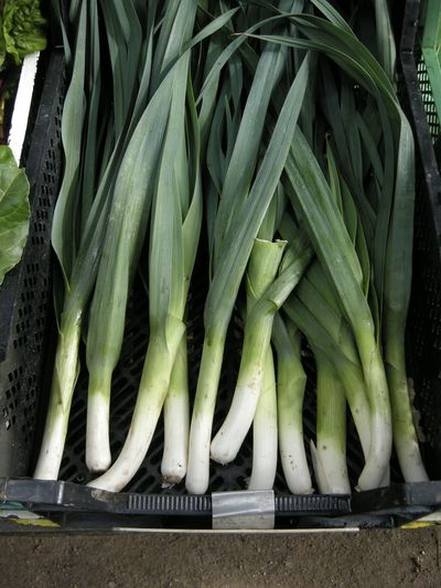 High angle view of fresh leek vegetables in crate at market stall