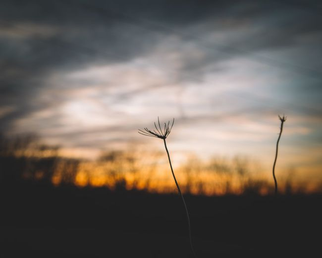 Nature Plant Growth Sunset Silhouette Sky Outdoors Landscape No People Beauty In Nature Flower Day Close-up