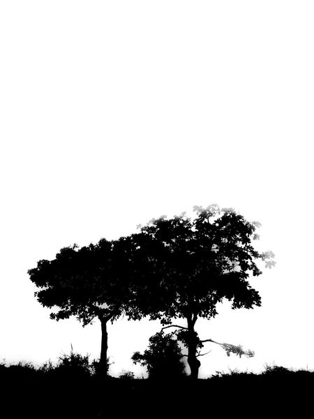 Solitary tree Tree Silhouette Nature No People Sky Animals In The Wild Outdoors Day Beauty In Nature Streetphotography Noir Blackandwhite Bnw Mobilephotography Blackandwhitephotography Amateurphotography ShotOnIphone Moodygrams Dark