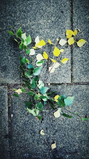 This Is Autumn day 11. Colour Changing Seasons Changing Colours Leaves On The Ground Walking Pavement