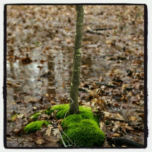 standing alone. Tolland, CT. 2014. Hiking Carl Zeiss Trees Green