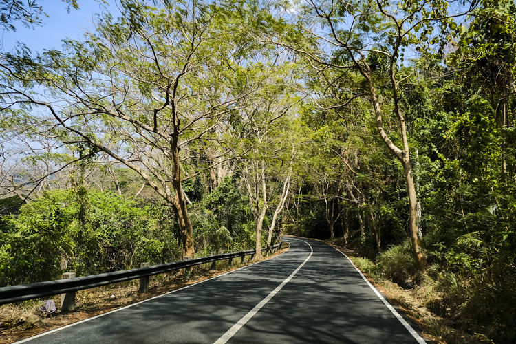 Tree Plant The Way Forward Direction Transportation Road Road Marking Nature Symbol Marking Sign Day Diminishing Perspective No People Growth Forest Green Color Tranquility Empty Road Beauty In Nature Outdoors Long Dividing Line Treelined Journey Travel Road