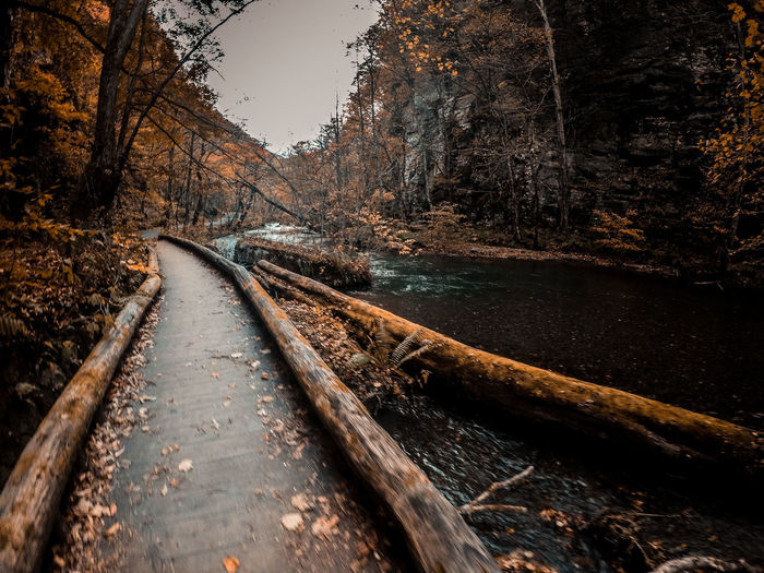 lost in the woods Nature River Photography Gopro Goprohero4 Autumn Photography Photographyislife Naturephotography Naturephotos Japan Oirasegorge EyeEm Selects Transportation Railroad Track No People Rail Transportation Train - Vehicle Outdoors