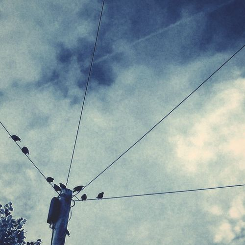 Cable Low Angle View Power Line  Sky Blue EyeEm Gallery Dirds Power Supply Starlings England Outdoors Looking Up Up Cloud - Sky Calm Beauty In Nature