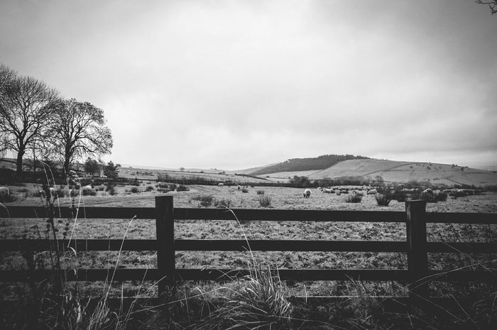 Agriculture Farm Field Tranquility Rural Scene Scenics Landscape No People Nature Cloud - Sky Beauty In Nature Tranquil Scene Growth Sky Outdoors Mountain Day Countryside Pendle Hill Landscapes Nature Beauty In Nature Farm Monochrome Black & White