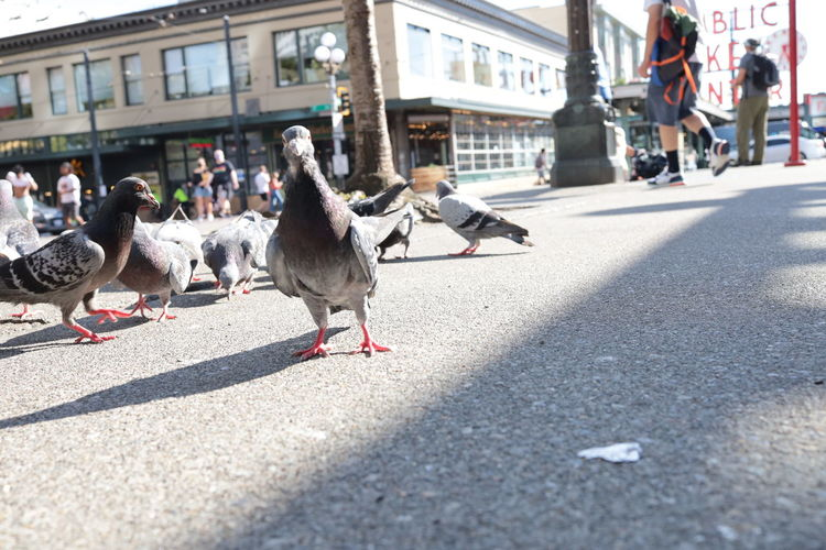 Pigeons on street in city