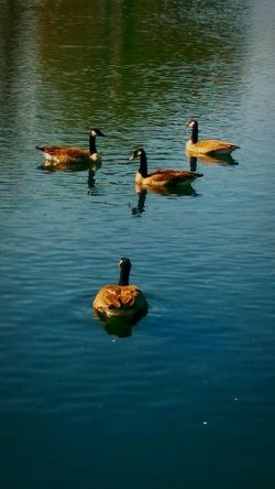 Animal Wildlife Bird Water Nature No People Outdoors Great Day Out Relaxing Swimming Beautiful