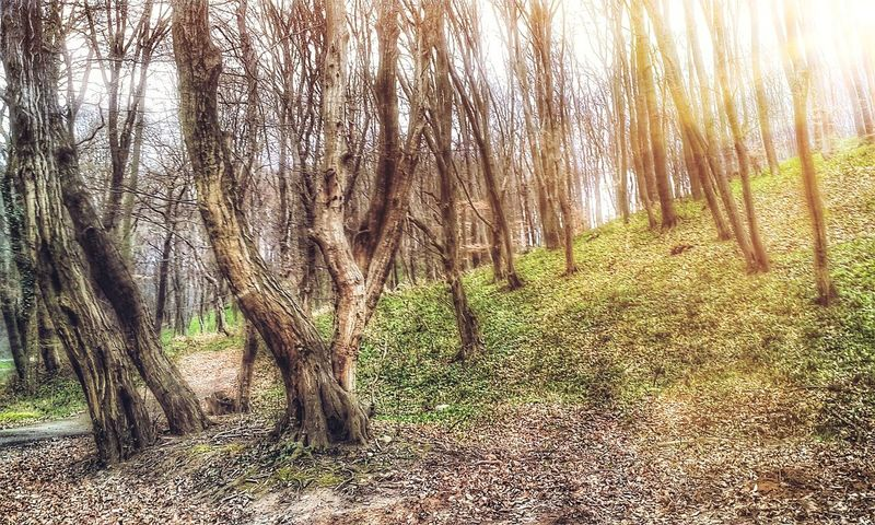 Edited Forest Mobile Photography Mobilephotography Nature Sunshine Trees Trees And Sky Wood Woods