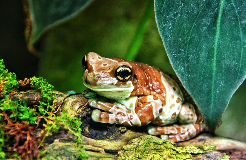 Nature Animals Frog