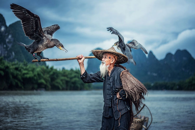 Cormorant fisherman in Traditional showing of his birds on Li river near Xingping, Guangxi province, China. Cormorant  Fisherman Traditional Birds River Xingping Guangxi Province China Guangxi Culture Human Connection