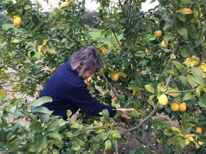 Picking lemons. Aviz, Portugal Beauty In Nature Branch Casual Clothing Day Flower Freshness Full Length Green Green Color Growth Holding Innocence Leaf Leisure Activity Lifestyles Nature Outdoors Park - Man Made Space People And Places Person Picking Lemons Plant Young Adult Young Women