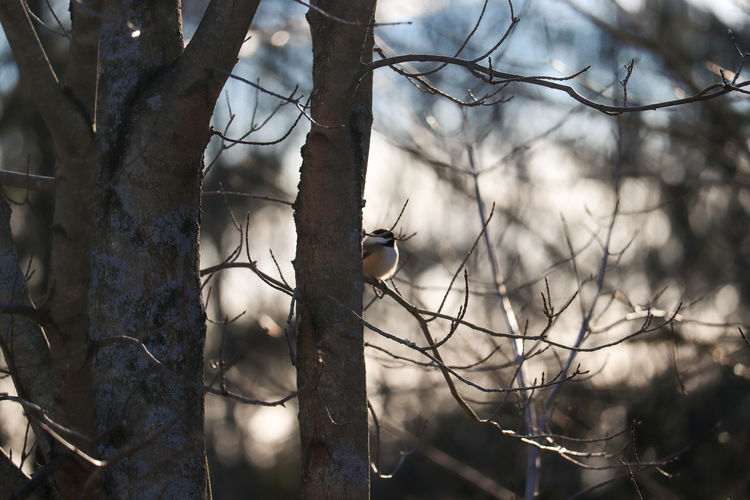 Close-up of bird on branch