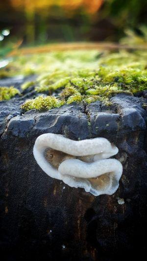 Mushroom on a