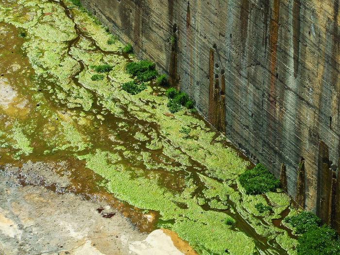 Alga Algae Brown Brown And Green Concrete Concrete Structure Concretewall Dam Damming El Pintado Embalse De El Pinta Engineering Grass Presa De El Pinta Seaweed Spillway Water
