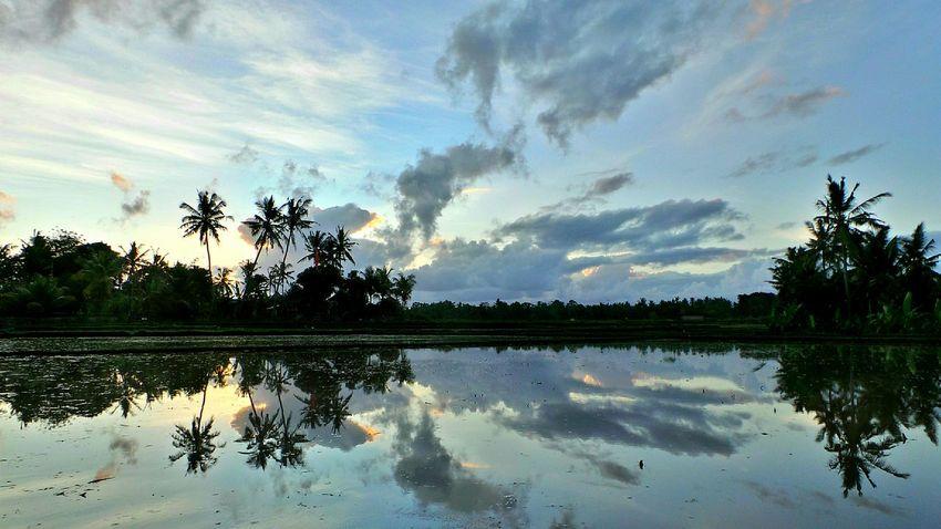 Bali Ricefields Ubud Jeanmart Bali Bali 16:9 Verybalitrip Very Bali Trip