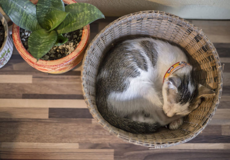 High angle view of cat in basket