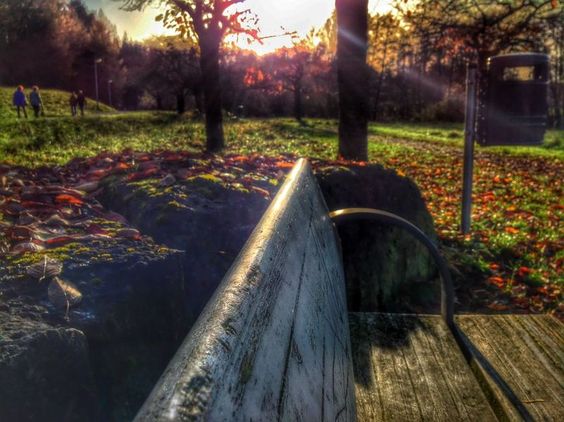 Sun Chilling Shadow Park EyeEm Nature Lover Peoplephotography People Watching OpenEdit Trees