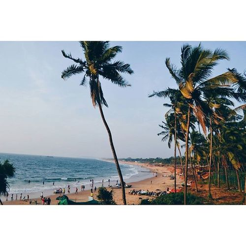 IndiaJourney India Journey Goa Sinquerimbeach Sinquerim Northgoa Beach Coconuttree VSCO Vscocam Explore Vscoexplore Vscotravel Travel