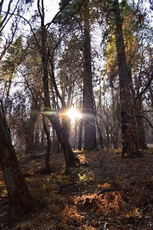 Light through the forest Nature Palomar Forest Trees