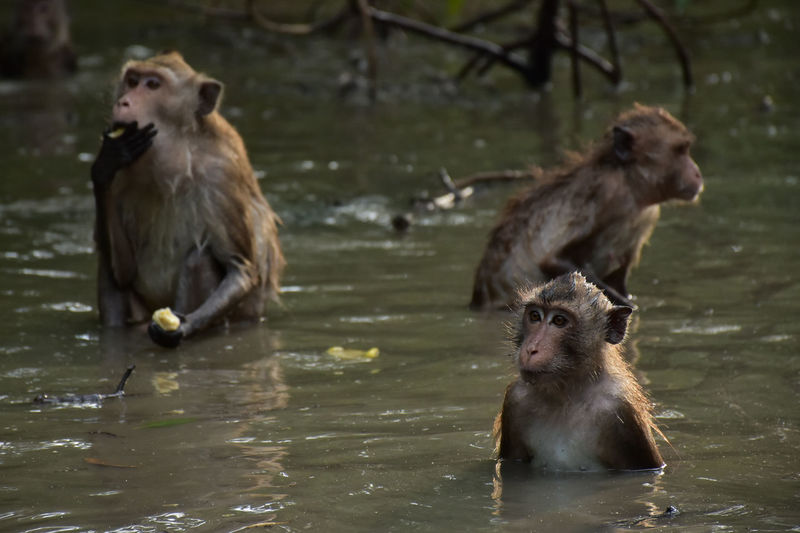 Animal Themes Animal Wildlife Animals In The Wild Focus On Foreground Mammal Monkey Nature Outdoors Two Animals Water Young Animal