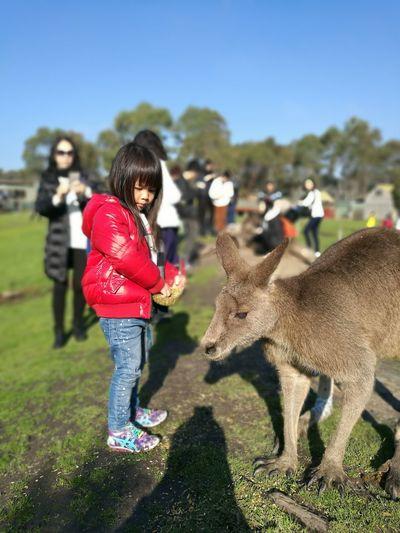Full length of girl standing by kangaroo at maru koala and animal park