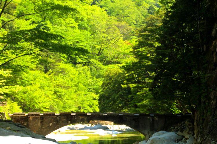 Green 面河渓 Bridge Arch