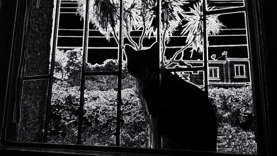 Home Is Where The Art Is Feline Improvised Pets Black & White Domestic Cat Day Demonio