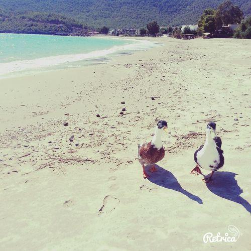 Sun Duck Retrica✌
