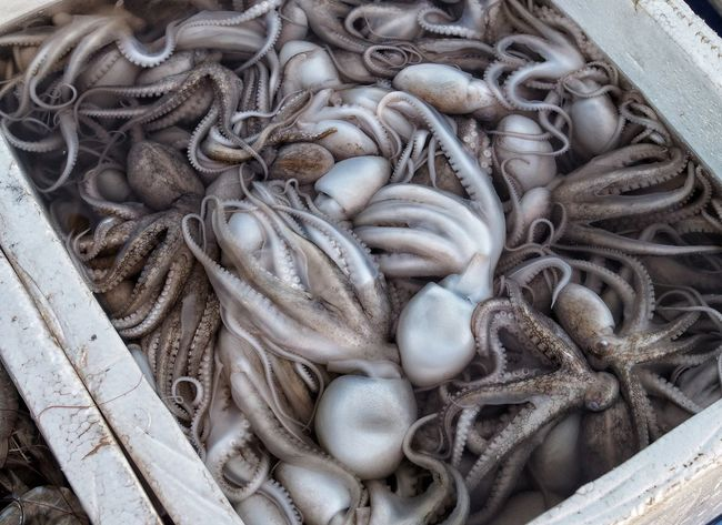 Squid for sale Food Market Cambodian Market Crab Market Kep Cambodia Food Market Octopus Squid No People Seafood Outdoors Day Close-up Food Freshness