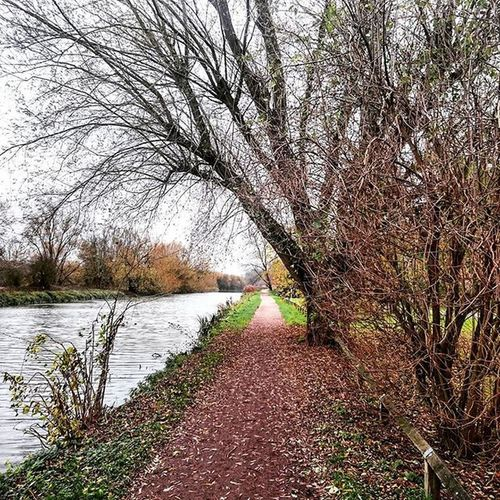 Walking along the canal, in Ware.. Ware Hertfordshire Canal Walk Path Water Trees Leaves Perspective Autumn Winter December