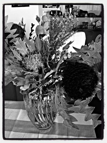 Trying Hueless Camera Bouquet Bw_collection Hueless