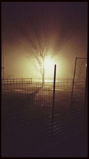 Fog Trees Winter [a:1030136] Night