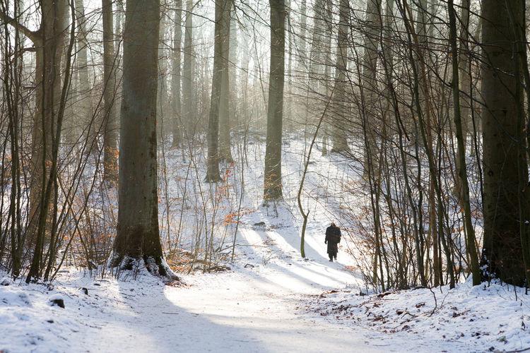 Aarhus, Denmark Denmark Sunlight Winter Beauty In Nature Cold Temperature Day Daylight Forest Trees Landscape Men Snow Sunlight Threes Walking The Great Outdoors - 2018 EyeEm Awards