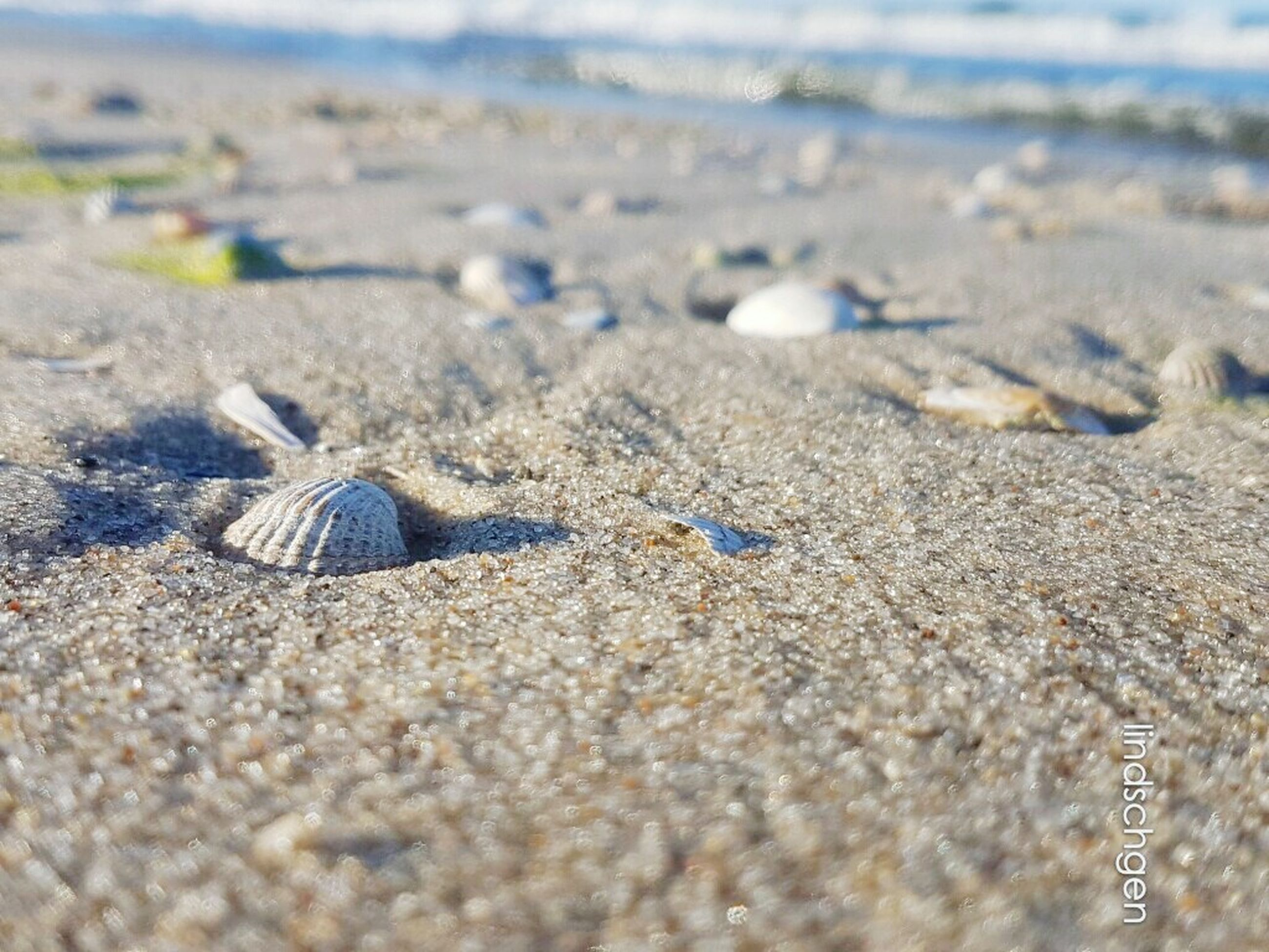 beach, sand, shore, surface level, selective focus, travel, nature, travel destinations, seashell, summer, tranquility, pebble, water, tourism, sea, vacations, scenics, day, beauty in nature, coastline, outdoors, tranquil scene, non-urban scene, sandy, arid climate