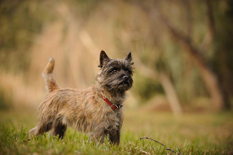Puppy Standing On Field