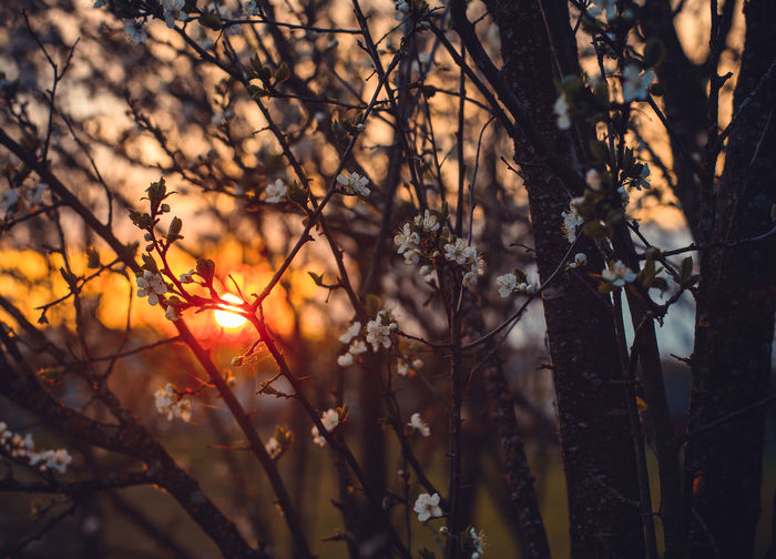 Plant Tree Sunset Nature Beauty In Nature Sunlight Branch Growth No People Focus On Foreground Tranquility Orange Color Sun Sky Forest Land Outdoors Selective Focus Back Lit Day Lens Flare
