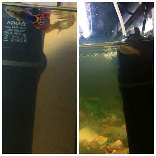 И они могут так часами зависать, странные рыбы??Photo Good Aquarium Handsomely fish underwaterkingdom like4like newinstagood instalike