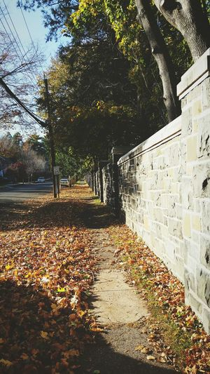 EyeEm Best Shots Autumn Light New Haven Walking Photographer Yale University