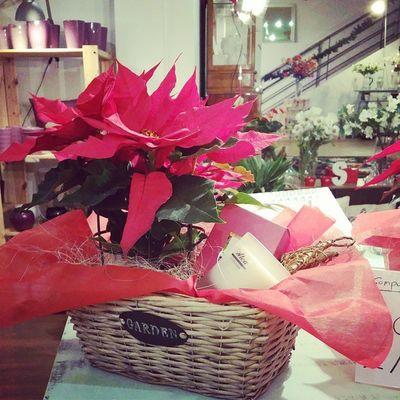 Más ideas para regalar estas Navidades, cesta rústica con flor de pascua y vela aromática de 40 horas. 29,95 €. Regalos Alea Aleafloristerias Xmas Navidad Flordepascua Velasaromáticas Gifts Conceptstore Vigo